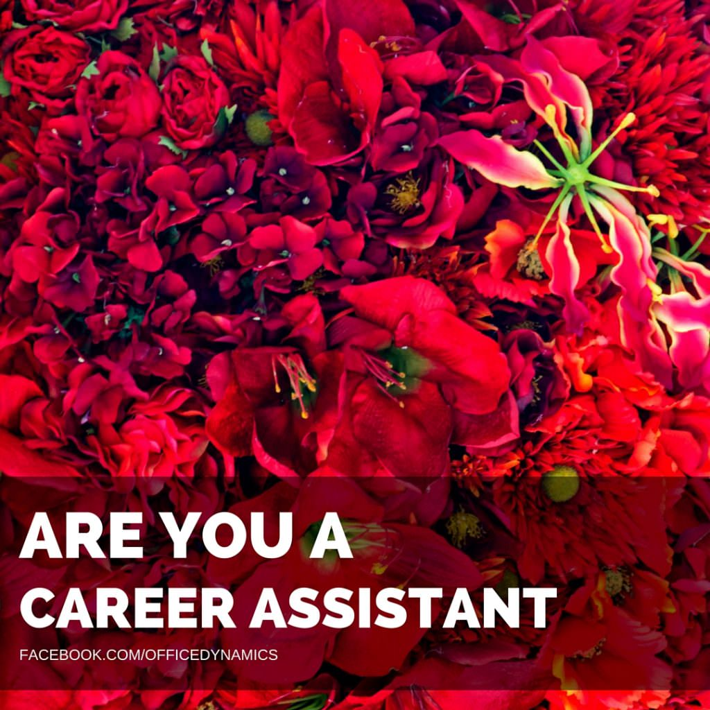 are-you-a-career-assistant