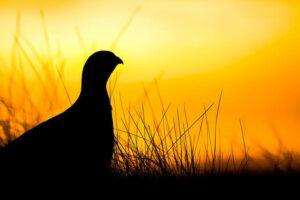 office_early_bird